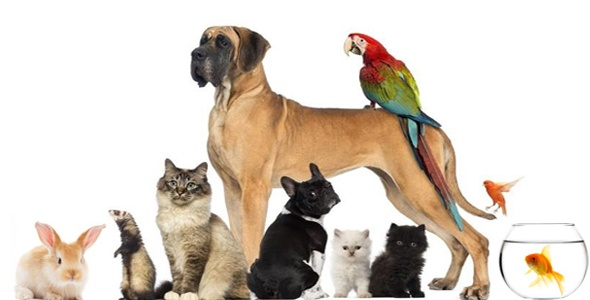 pets2.jpg